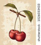 cherry hand drawing vintage... | Shutterstock .eps vector #1026033433