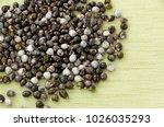 job's tears   coix lachryma... | Shutterstock . vector #1026035293