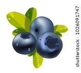 blueberries with leaves | Shutterstock .eps vector #1026091747