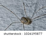 the spiders are a class of... | Shutterstock . vector #1026195877