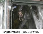 the spiders are a class of... | Shutterstock . vector #1026195907