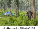 dubare forest  india   october... | Shutterstock . vector #1026266113