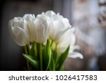 vase with white tulips in the... | Shutterstock . vector #1026417583
