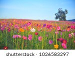 colorful flora in summer | Shutterstock . vector #1026583297