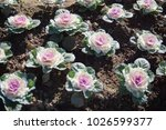 flowers bloom flora  | Shutterstock . vector #1026599377