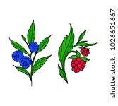 berries vector illustration....   Shutterstock .eps vector #1026651667