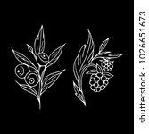 berries vector illustration....   Shutterstock .eps vector #1026651673