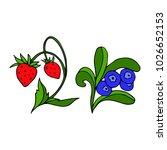 berries vector illustration....   Shutterstock .eps vector #1026652153