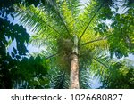 beauty of the royal palm tree... | Shutterstock . vector #1026680827