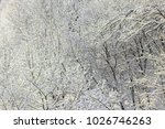 branches covered with snow in...   Shutterstock . vector #1026746263