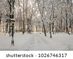 winter park with trees covered...   Shutterstock . vector #1026746317