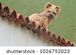 Little Brown Dog Sits On A...