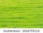 green grass field in...   Shutterstock . vector #1026755113