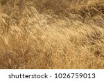 rural area fields india | Shutterstock . vector #1026759013