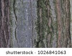 Small photo of Bark texture. Wooden texture. Background. Wooden bark close up.