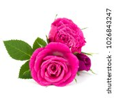 pink rose flower bouquet... | Shutterstock . vector #1026843247