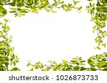 green leaf isolated on white... | Shutterstock . vector #1026873733