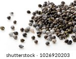 job's tears   coix lachryma... | Shutterstock . vector #1026920203