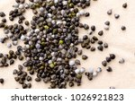 job's tears   coix lachryma... | Shutterstock . vector #1026921823