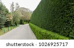 beautifully trimmed and... | Shutterstock . vector #1026925717