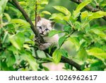 small kitten with blue ayes... | Shutterstock . vector #1026962617