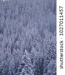 trees covered with hoarfrost... | Shutterstock . vector #1027011457