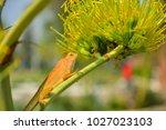 chameleon in thailand | Shutterstock . vector #1027023103