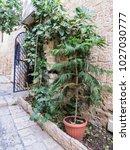 tel aviv  israel   january 2 ... | Shutterstock . vector #1027030777