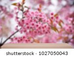 beautiful wild himalayan cherry ... | Shutterstock . vector #1027050043