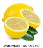 lemon fruit slice with leaf... | Shutterstock . vector #1027237543
