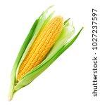 corn on the cob kernels close... | Shutterstock . vector #1027237597