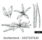 vanilla flower and beans with... | Shutterstock .eps vector #1027237633