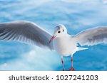 Sea Wild Seagulls