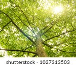 green forest trees. nature... | Shutterstock . vector #1027313503