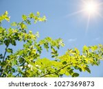 spring nature background with... | Shutterstock . vector #1027369873