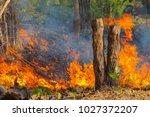 forest fire  wildfire burning... | Shutterstock . vector #1027372207