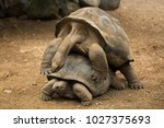 mating tortoises at the zoo | Shutterstock . vector #1027375693