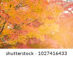 yellow and red maple leaves in... | Shutterstock . vector #1027416433
