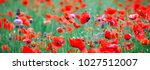 web banner field of poppy... | Shutterstock . vector #1027512007