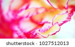 web banner macro abstract of... | Shutterstock . vector #1027512013