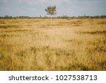 a beautiful swamp landscape by...   Shutterstock . vector #1027538713