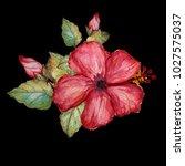 decorative watercolor hibiscus
