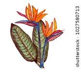 decorative watercolor bird of