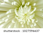 abstract image of inside of... | Shutterstock . vector #1027596637