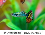 little fish in fish tank or... | Shutterstock . vector #1027707883