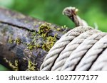 Small photo of Rope bind on wood in ferest, nature backgroud