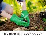 woman planting seedlings in bed ... | Shutterstock . vector #1027777807