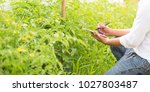agriculture technology for food ... | Shutterstock . vector #1027803487