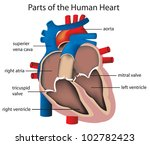 illustration of parts of the... | Shutterstock . vector #102782423