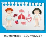 boy and girl with different... | Shutterstock .eps vector #1027902217